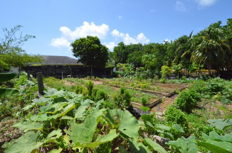 THE ORGANIC GARDEN - SOUTH SOUND HOME ON LARGE PARCEL OF LAND - Cayman Residential Property